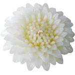 gerbera-floating-white-lg copy