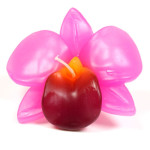 pinkxl-orchid-large