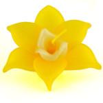 yellow-narcissuc-large
