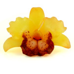 yellow-orchid-brown-centre-
