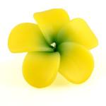 yellow-plumeria-large2